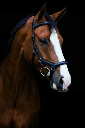 Horseware Rambo Micklem Deluxe Competition Bridle with FREE GIFT