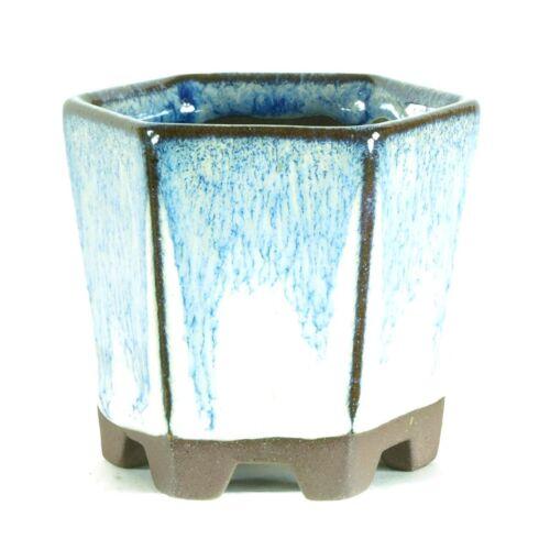 Bonsai Coque 6x6x6cm bleu clair hexagonale VERNISSEE s06812hb