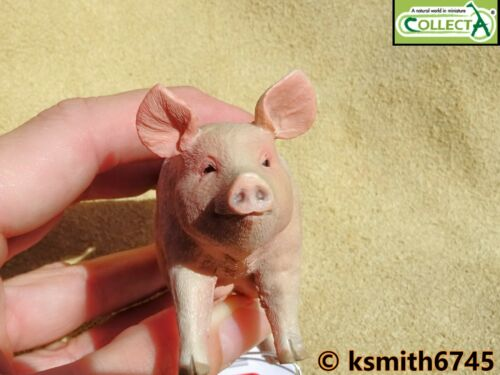Collecta Sow femelle cochon solide Jouet en plastique Ferme Pet Animal Porc Cochon New