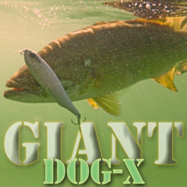 Megabass BAIT-X crankbait bass fishing lures. Best color choices