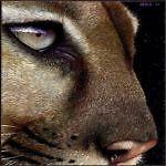 Cougar Charm