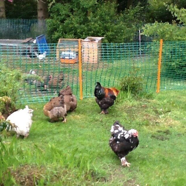 Green Chicken Coop Chicken Run Chicken Netting Fencing - 5.5kg - 1m x 50m Roll