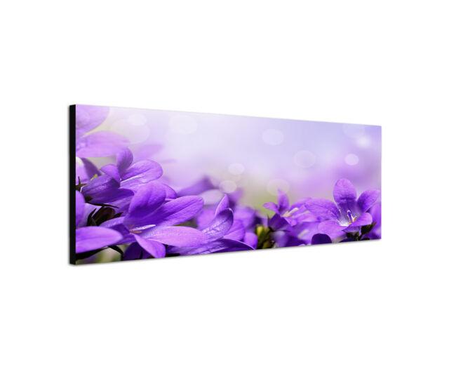 150x50cm Panorama Wandbild lila Glockenblume Makro Blumen Leinwand Sinus Art