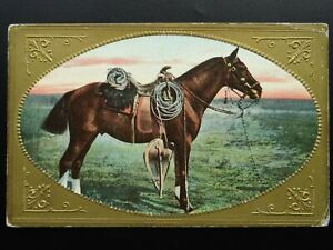 Horse-Theme-PORTRAIT-of-AMERICAN-WESTERN-STYLE-HORSE-Old-Postcard