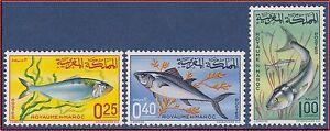 Copieux 1967 Maroc N°514/516** Poissons, 1967 Morocco Fish Set Mnh