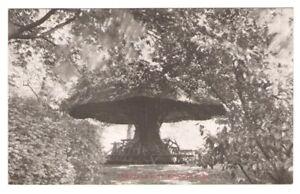 Postcard-WA-Seattle-Kinnear-Park-Umbrella-Rest-RPPC-Reid-Real-Photo-c1907