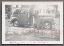 Vintage Car Photo Great Dane Dog & 1950 Ford Anglia Prefect Automobile 762929
