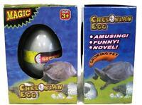 2 Hatching Growing Tortoise Chelonian Hatch ' Em Egg/turtle Growing Pet