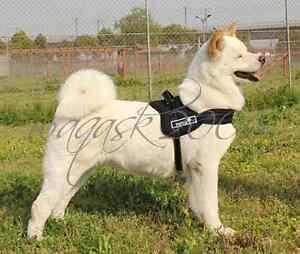 Black-Dog-Harness-S-M-L-XL-padded-extra-Big-large-medium-small-heavy-duty-Husky