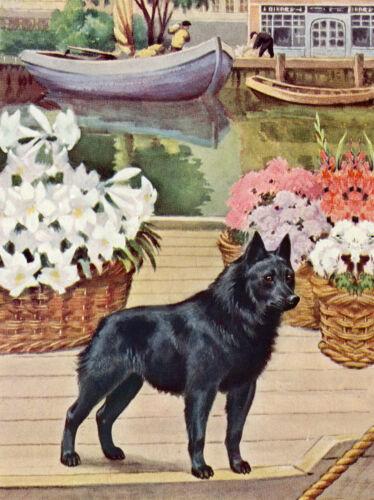 SCHIPPERKE CHARMING DOG GREETINGS NOTE CARD