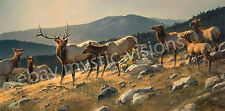 Nancy Glazier HIGH COUNTRY Signed & Numbered w/coa Retail $185 Elk Art Print