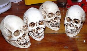 1x-Realistic-Human-Skull-Head-Replica-Medical-Model-10x7x8-5cm-12