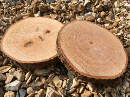 """2x Rustic Wedding Decoration Table pieces Log Slice Wood Small 6x1"""""""