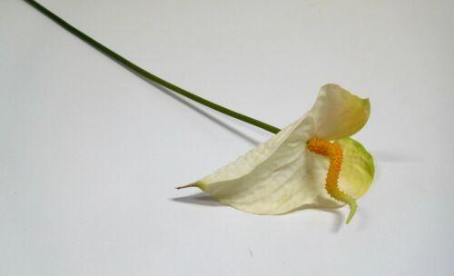 Anthurie Soie Fleur Art Fleur 75 cm crème blanc jaune 42691-05 f11
