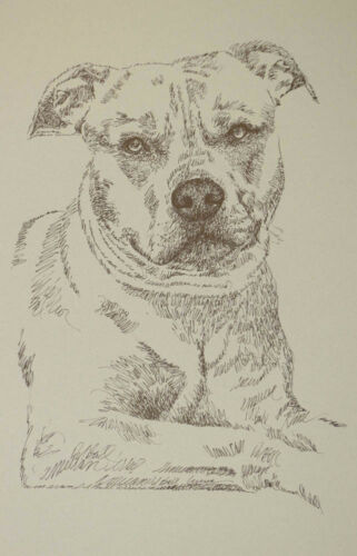 AMERICAN PIT BULL TERRIER WORD DOG DRAWING #29 Kline adds dogs name free. GIFT