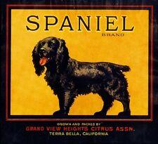 Terra Bella Cocker Spaniel Puppy Dog Orange Citrus Fruit Crate Label Art Print