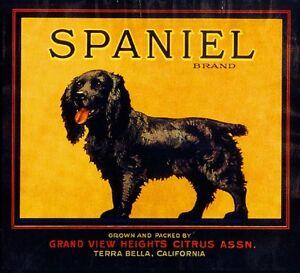 Terra Bella Cocker Spaniel Puppy Dog Orange Citrus Fruit Crate Label