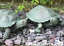 Set of 2 Tortoise Terrapin verdigris effect pond garden ornament decorations