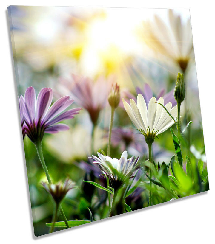 Summer Floral Meadow Scene SQUARE CANVAS WALL ART ART ART Boxed Framed 1a6f78