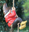 Grand-Gnome-amant-cadeau-arbre-escalade-pendaison-Corde-Ornement-Decoration-Sculpture miniature 3