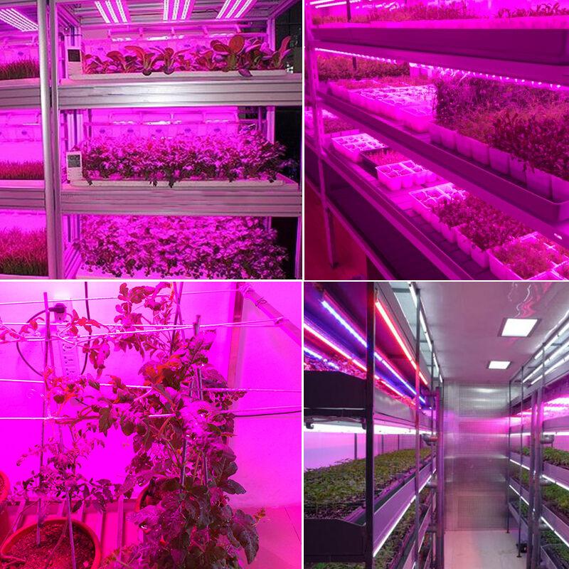 Smd 5050 Led Strip Grow Light Lamp Full Spectrum For Plant