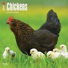 Chickens 2017 Square by Inc BrownTrout Publishers