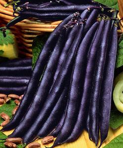 Seeds-Giant-20g-Beans-Parpl-Tippy-Bush-Organic-Heirloom-Russian-Ukraine