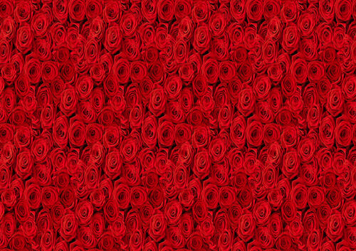 RED ROSES FLOWERS BLOSSOM BLOOM Photo Wallpaper Wall Mural  335x236cm