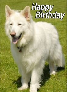 Alsatian-German-Shepherd-Dog-A6-Textured-Birthday-Card-BDGSD-19-paws2print