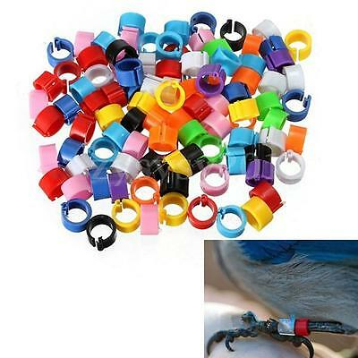150X 10mm Poultry Chicken Pigeon Bird Chicks Parrot Leg Bands Duck Clip-on Ring