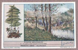 Leatherleaf-Fern-Fougere-Male-Plant-Medical-Drug-Herb-60-Y-O-Trade-Ad-Card