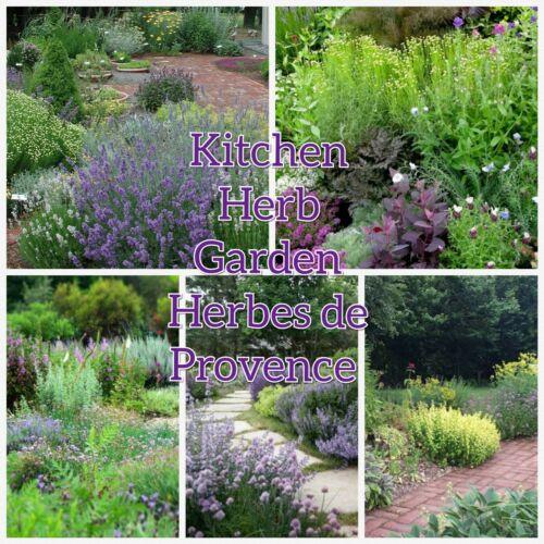 10 Varieties.info,dried herbs,chart. Kitchen Herb Garden Seed Herbes de Provence