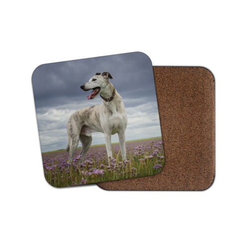 Superbe lévrier Coaster-Hound Dog Puppy Whippet Pets Animaux Cadeau #16042