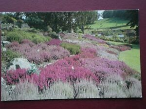 POSTCARD CUMBRIA WINDERMERE  THE LAKELAND HORTICULTURAL GARDENS - Tadley, United Kingdom - Full Refund less postage if not 100% satified Most purchases from business sellers are protected by the Consumer Contract Regulations 2013 which give you the right to cancel the purchase within 14 days after the day you receive th - Tadley, United Kingdom