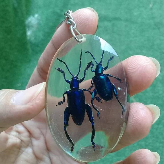 Beetle Bug Blue Insect Stick KeyChain Taxidermy Keyring Display Real Clear Resin