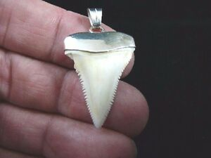 S414 47 1 14 great white shark tooth jewelry silver cap modern image is loading s414 47 1 1 4 034 great white aloadofball Gallery