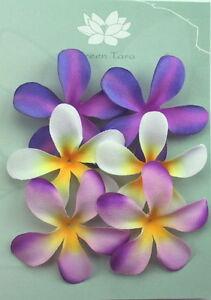 FRANGIPANIS-Petals-6-Pk-PURPLE-amp-CREAM-2-Toned-Mixed-6cm-across-Green-Tara-A