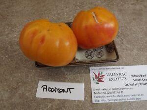 Piedmont-Tomate-10-Samen-Saatgut-der-besten-Sorten-zu-Konservierung