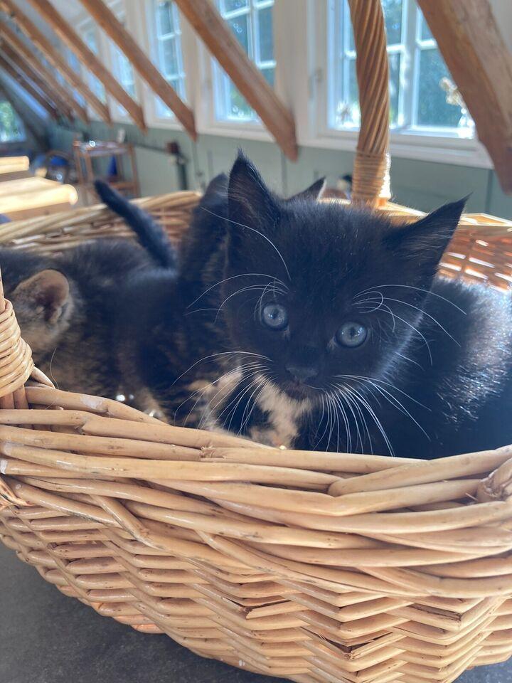 Flere killinger, Gårdkat, 12 uger