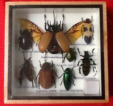 REAL EXOTIC HUGH 8 INSECT DISPLAY TAXIDERMY ENTOMOLOGY CICADA BEETLE INSECTS