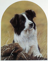 BORDER COLLIE WORKING SHEEPDOG LIMITED EDITION PRINT Classic Breeds John Silver