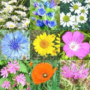 WILD-FLOWER-BUTTERFLY-amp-BEE-MIX-2000-SEEDS-poppy-cornflower-oxeye-daisy-etc