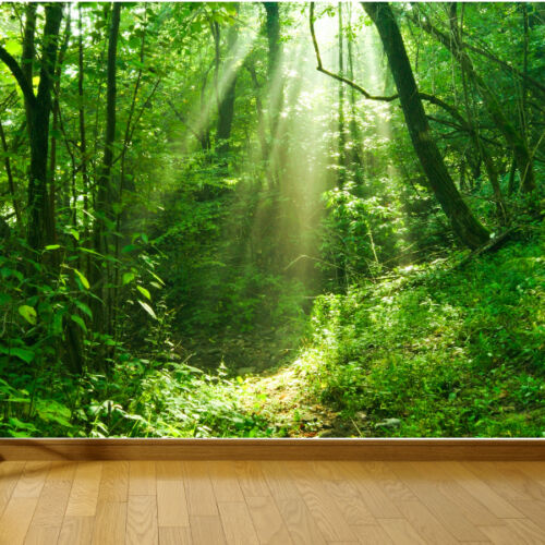 Sun shinning through forest nature photo wallpaper mural bedroom design wm213
