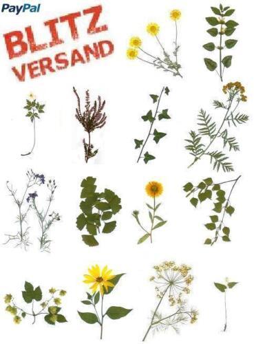PTA,SCHULE,UNI Lieferdauer i R Herbarium 5 Pflanzen zum Auswählen 1 Tag d