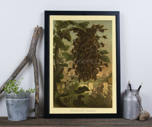 """Apiary Honey Bees Swarm Insects Making Honey Poster Print 6x9/"""" and up 1800s"""
