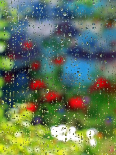 ABSTRACT RAIN DROPS WINDOW GARDEN FLOWERS HOME ART PRINT POSTER PICTURE BMP1218A