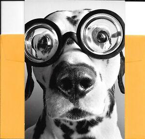 Funny-Dalmatian-Old-Age-Dog-In-Big-Goofy-Glasses-Greeting-Card-By-Avanti