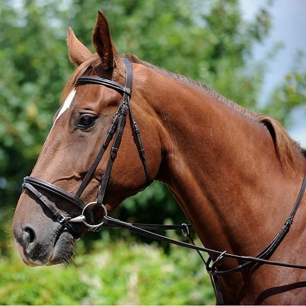 John Whitaker-Flash Brida Y Riendas De Cuero Negro Marrón Pony COB FULL Jw