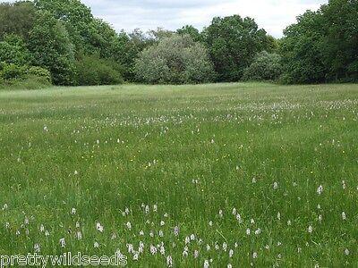 Meadow Grass Seeds Seed Lawn SEED Euro Grass Meadow Klassik 20kg
