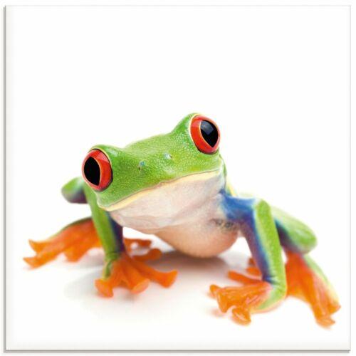 Artland Glasbild Wandbild Glas viele Größen Natur Tiere Frosch Laubfrosch G1MH